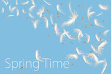 Fluffy dandelion flower with text of spring time.