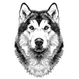 Dog Breed Alaskan Malamute Head Symmetry Looks Right Sketch  Graphics Black And  Drawing Wall Sticker