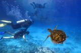 Scuba divers explore a coral reef - 159696627