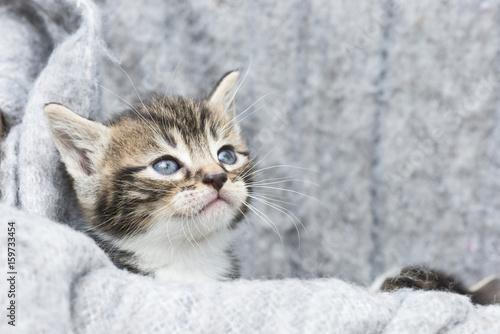 little kitten in a box