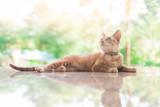 cat sitting on floor with reflex - 159737879