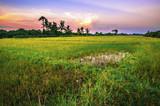 Landscape of open field in evening time