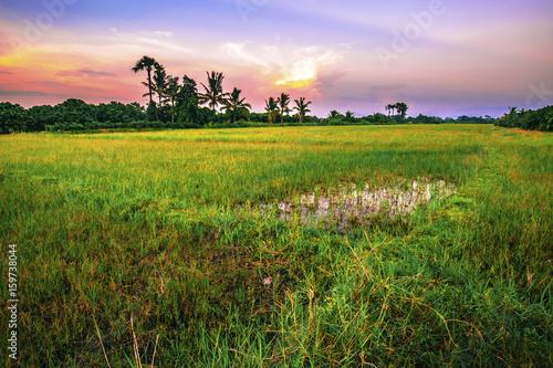 Fotobehang Purper Landscape of open field in evening time