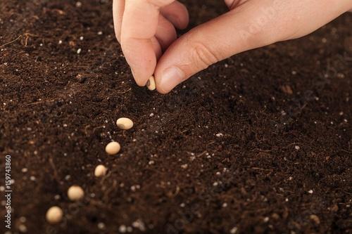 Seeding.