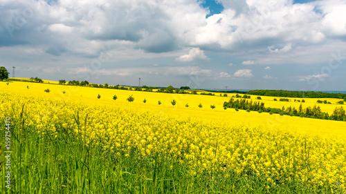 Landschaft mit einem Rapsfeld