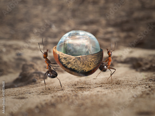 Two ants carrying a heavy load - a drop of water in a nut shell Poster