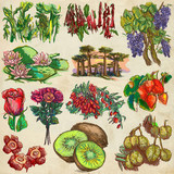 flowers and trees around the world - an hand drawn collection, freehand sketching - 159765045