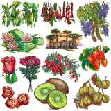 flowers and trees around the world - an hand drawn collection, freehand sketching - 159765246