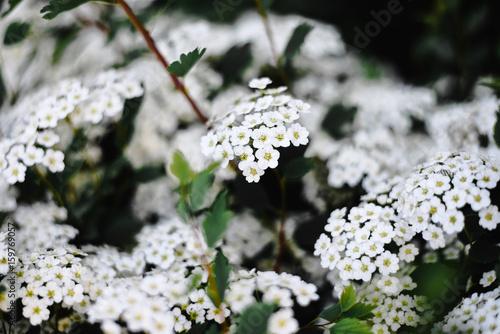 Plants - 159769057