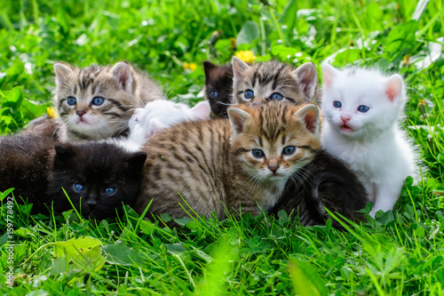 Group of little kittens in the grass Poster