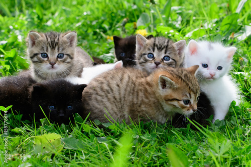 Group of little kittens in the grass