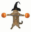 The cat in the hat is holding a barbell made of pumpkins. White background.