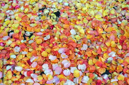 Foto Murales Orange Blütenblätter