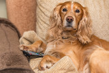 Dog with TV remote control