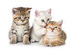 Drei Kätzchen © DoraZett