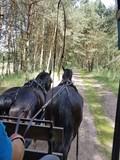 Fototapeta Horses - Wóz konny © michalsen