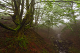 Belasutegi forest at Gorbea Natural Park