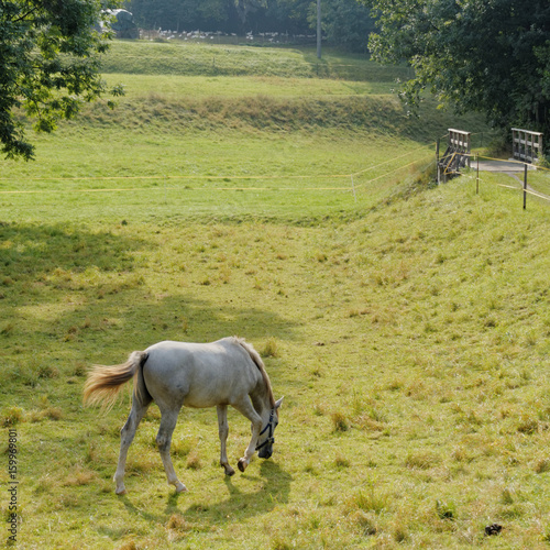 light grey horse on green grass