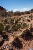Arches National Park - Cactus