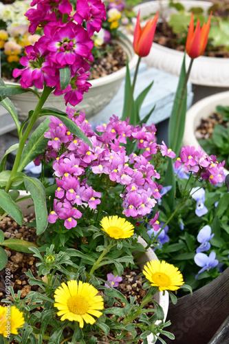 春のカラフルな寄せ植え