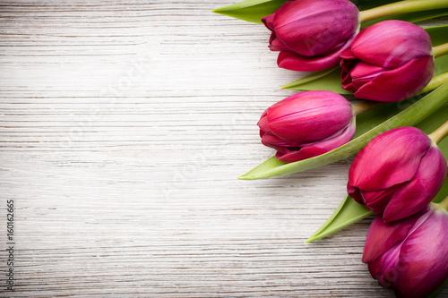 Tulip. Poster