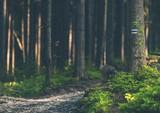 Deep Forest Trailhead