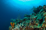 coral formations on the reef around Grand Cayman have taken centuries to grow. This abundant ecosystem is enjoyed by scuba divers who marvel at the natural beauty of the underwater caribbean world