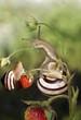 Улитка ползает по ягоде клубники