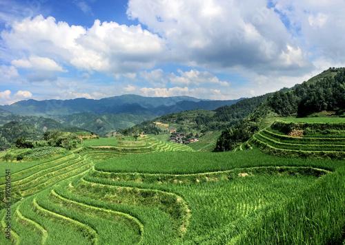 Lush rice terraces of Longsheng China