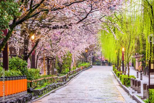 Japonia wiosną. Gion Shirakawa, Kioto