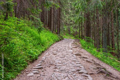 Zdjęcia na płótnie, fototapety na wymiar, obrazy na ścianę : Alley in the woods; Beautiful forest