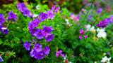 wild flower from botanical park background.