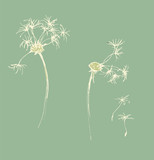 Sketch of a dandelion