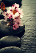 Quadro Beautiful pink Spa Flowers on Spa Hot Stones on Water Wet Background. Side Composition. Copy Space. Spa Concept. Dark Background.