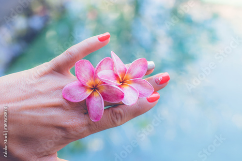 Plexiglas Plumeria Plumeria frangipani flower in woman hand on a swimming poolbackground