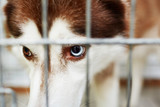 Angry or ill dog in cage
