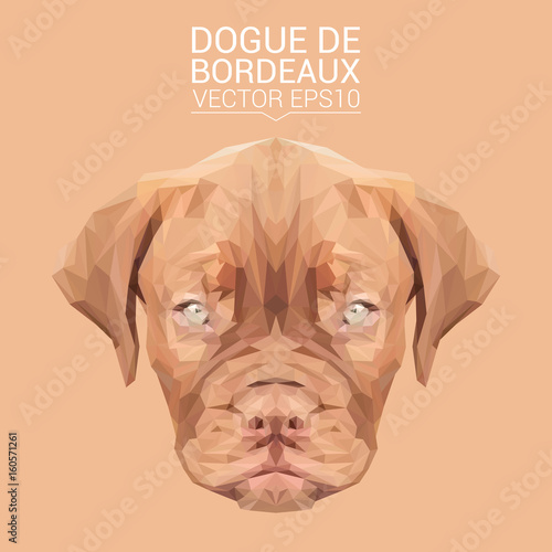 Dogue de Bordeaux Dog animal low poly design. Triangle vector illustration. © shekularaz