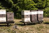 Bienenkörbe im Spessart