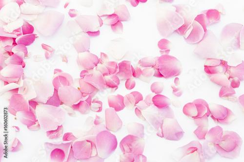 Foto Murales Pink Rose Petals