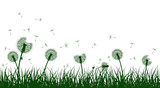 Green grass silhouettes with dandelion flowers, vector illustration.