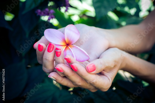 Aluminium Plumeria Plumeria frangipani flower in woman hands on a beautiful nature background