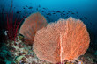Sea Fans and Fish