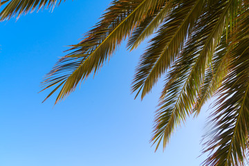 Palm tree leaves on blue sky background close up