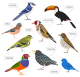 Pet birds collection,  breeds icon set flat style isolated on white.  Create own infographic about pets
