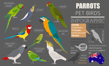 Parrot breeds icon set flat style isolated on white. Pet birds collection. Create own infographic about pets