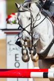 Horse Head Legs Rider Jumping Closeup  - 160790664