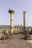 Archaeological Site of Volubilis, ancient Roman empire city, Unesco World Heritage Site