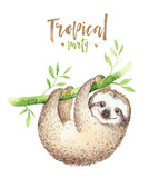 Baby animals sloth nursery isolated painting. Watercolor boho tropical drawing, child tropical illustration. cute palm tree leaves, tropic green texture, exotic flower. Aloha drawing - 160805688