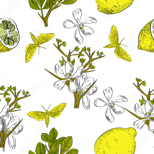 Fototapeta Vector drawn citrus seamless pattern on white background with butterflies and flowers in a sketch style. Exotic collection.
