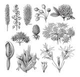 Flower collection / vintage illustration  - 160865076